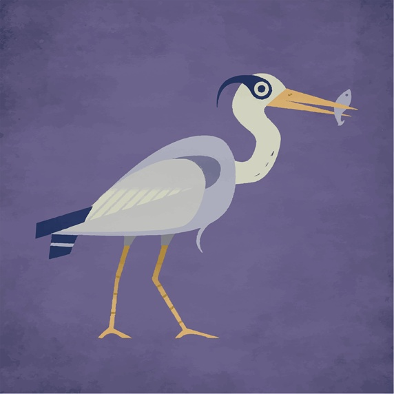 Great blue heron on purple background