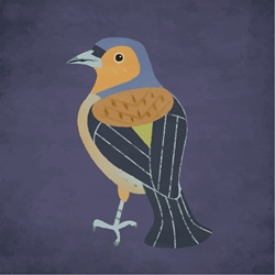 Thrush against purple background