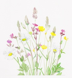 Buttercups, red campion and grasses