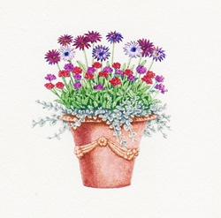 Ornate plant pot with Osteospermum, Verbena and Helichrysum