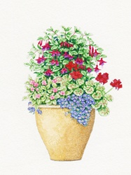 Plant pot with Fuchsia, Pelargonium, Impatiens and Felicia