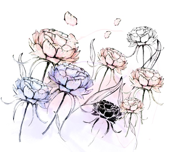 Peony flowers on white backgrounds