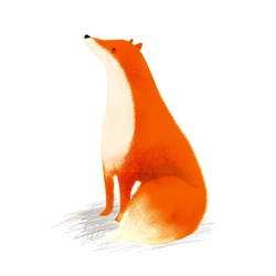 Fox sitting against white background