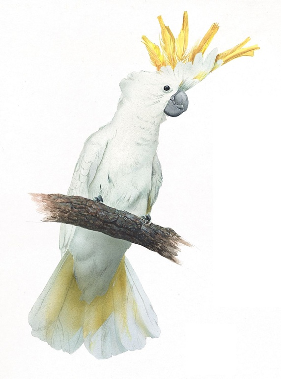 White and yellow parrot perching on branch