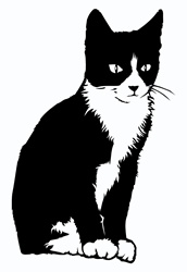 Black and white cat sitting