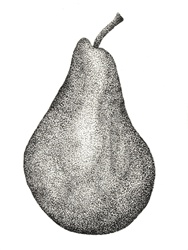 Close-up view of pear