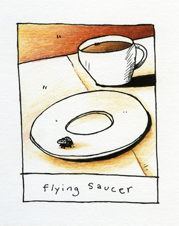 Fly on saucer and coffee cup