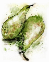 Close up of two green Conference pears
