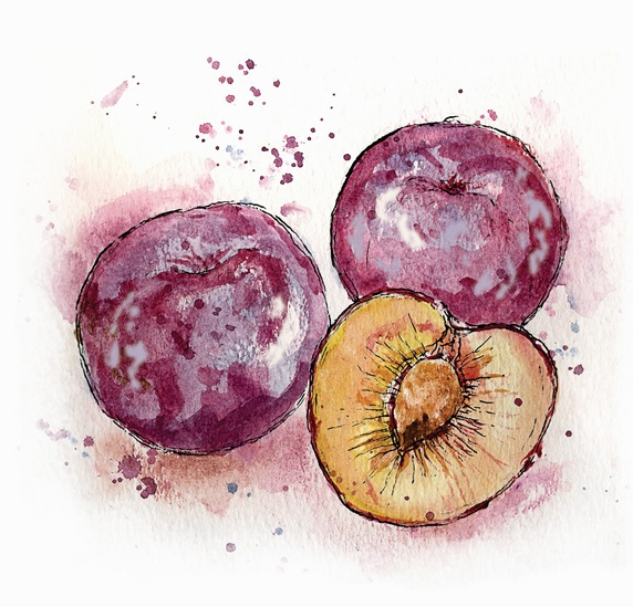Close up of three plums