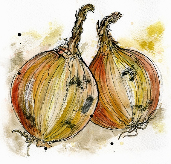 Close up of two onions