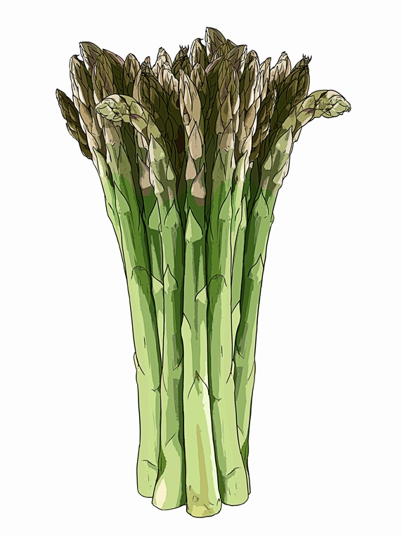 Bunch of asparagus spears on white background