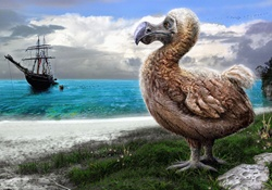 Dodo bird on beach watching sailing ship arrive