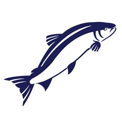 Fish on white background