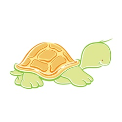Baby turtle on white background