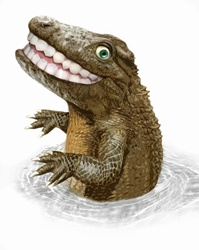 Happy crocodile with toothy smile