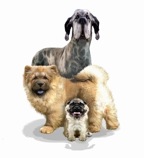 Three different dog breeds looking at camera