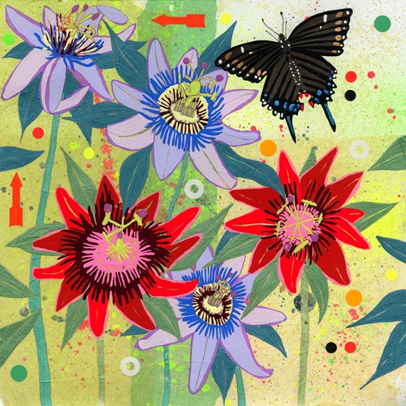Black Swallowtail Butterfly and Passion Flowers (Passiflora)
