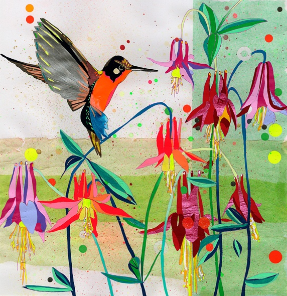 Hummingbird feeding on Columbine (Aguilegia)