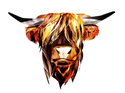 Head of brown bull