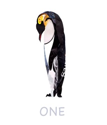 Penguin against white background