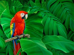 Scarlet macaw parrot perched on branch in lush leaves