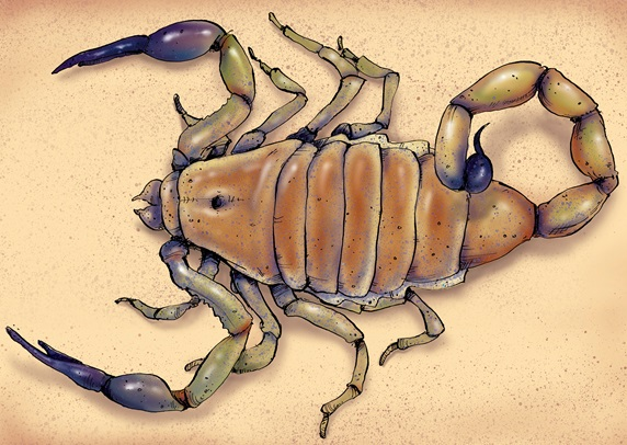 Illustration of deathstalker scorpion