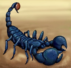 Close up of Emperor Scorpion