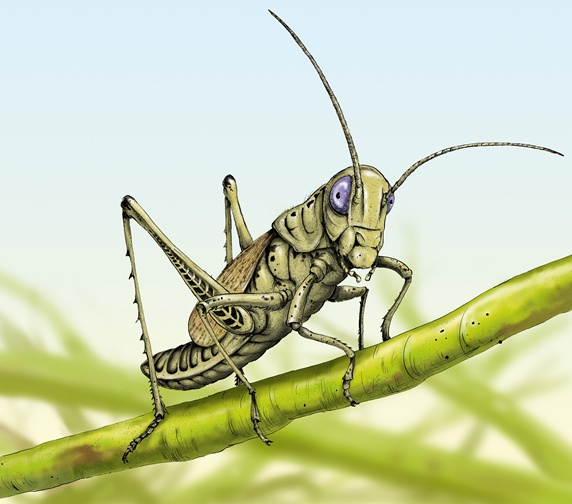 Close up of grasshopper on stem