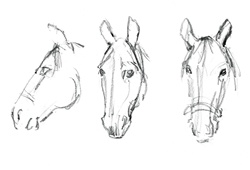 Three heads of horses