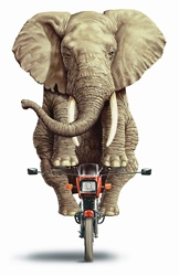 Elephant riding on a motorbike