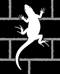 Lizard crawling on brick wall