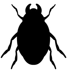 Black bug against white background