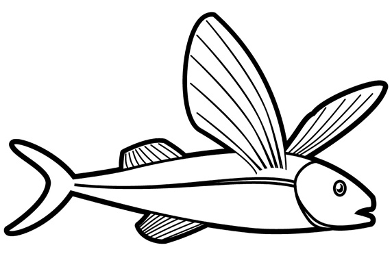 Flying fish on white background